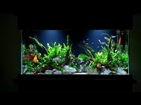 How To: Planted Aquarium Tutorial - 55 Gallon Aquascape With Discus