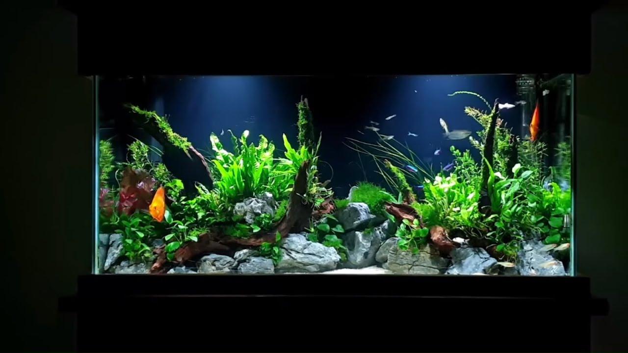 How To Planted Aquarium Tutorial 55 Gallon Aquascape With Discus Youtube