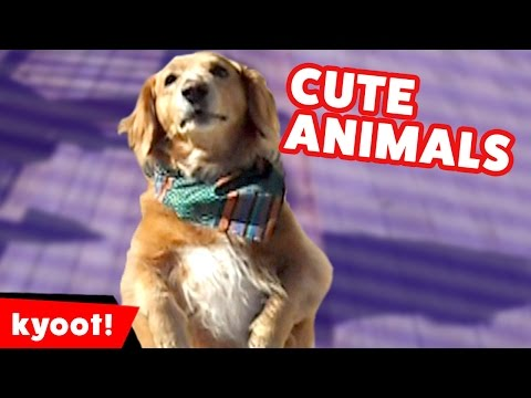 Funniest Pet & Animals Bloopers, Clips & Moments October 2016 Weekly Compilation | Kyoot Animals
