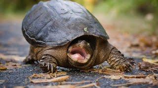 Приколы с черепахами=))) Смешное видео)/Fun with turtles=))) Funny video)