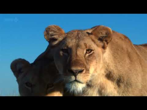 Animals of Africa in HIGH DEFINITION HD Documentary   David Attenborough