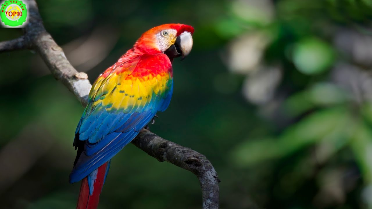 The process of making adjustments to the environment through behavior, physical feature or other characteristic that will help a living thing survive in its environment. Top 10 Most Beautiful Birds Of Amazon Rainforest Youtube