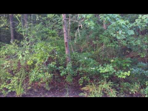 Hunting Field Trail At Fox Tail Kennels 2017