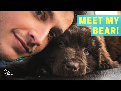 MEET MY BEAR PUPPY! | Health Benefits of Having a Dog | Doctor Mike