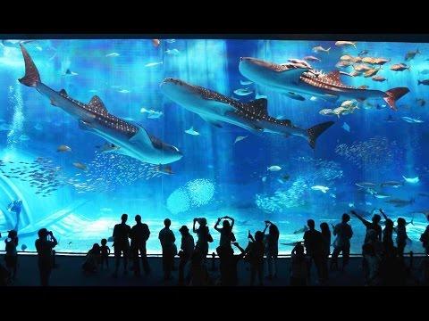 Aquarium Meditation - Peaceful Tropical Fish Tank - Ancient Orchestra 528 Hz Solfeggio Calming