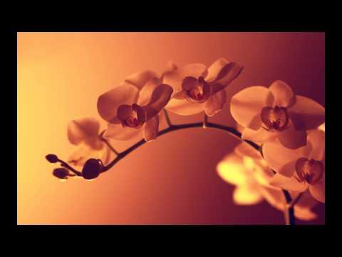 Sayama - Massage, Sacred Healing Touch