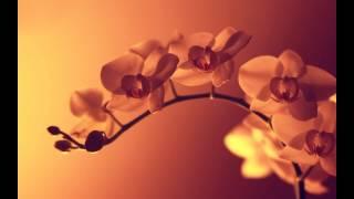 Sayama Massage, Sacred Healing Touch