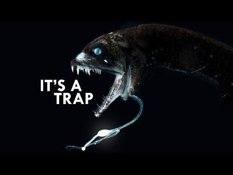 Bioluminescence: Don't Trust The Light