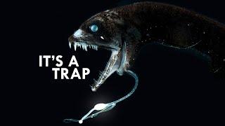 Bioluminescence: How Animals Get Lit