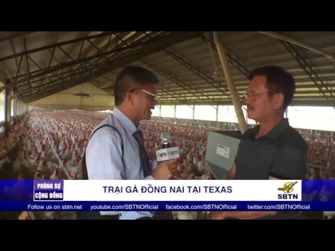 PHÓNG SỰ CỘNG ĐỒNG: Ghé thăm trại gà Đồng Nai tại Austin, Texas
