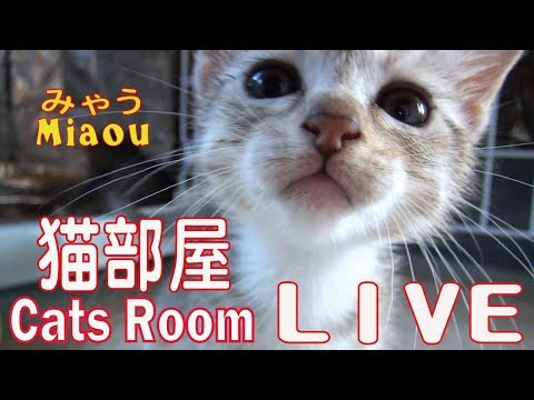 猫部屋タワー【猫部屋ライブ みゃう】Cat Tower [Cats room Miaou]