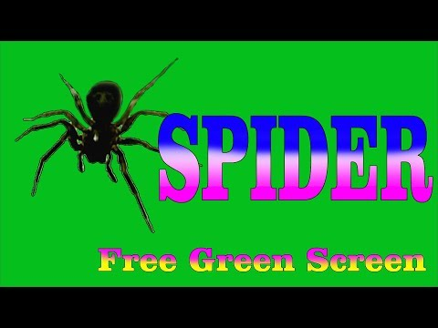 SPIDER Free Green Screen