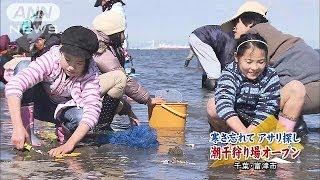 千葉県富津市では、潮干狩り場がオープンしました。 首都圏のトップを切...