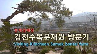 분재경매장 김천수목분재원 방문기Visiting Kimcheon Sumok bonsai farm