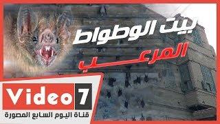 هجوم الخفافيش فى مصر.. بيت الوطواط الذى أثار الرعب
