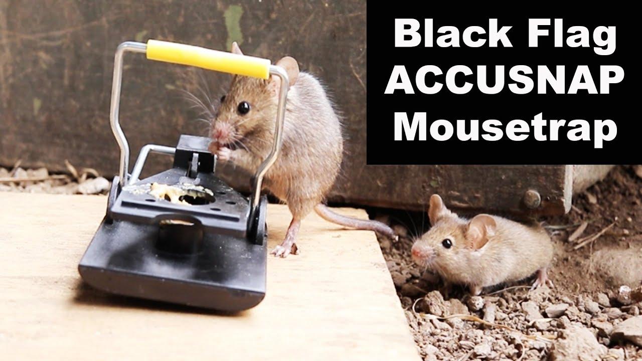 black-flag-accusnap-mousetrap-with-rocking-base-mousetrap-monday