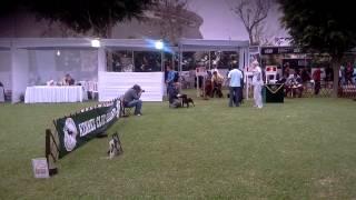 Kennel Club Peruano (inca's Dog Show 2013) Staffordshire Bull Terrier.