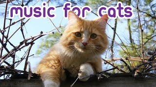 EXTREMELY Soothing Cat Therapy Music  Relax Your Cat!