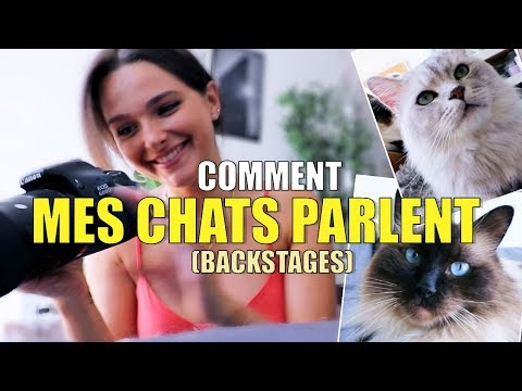 COMMENT MES CHATS PARLENT ? (BACKSTAGES)