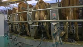 Le savoir-faire du groupe COSTE en intérieur de ferme