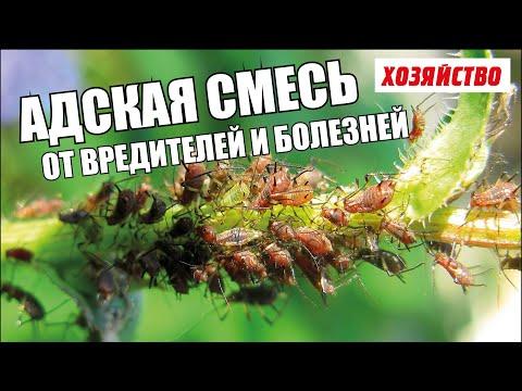 Адская смесь против болезней и вредителей в саду и огороде
