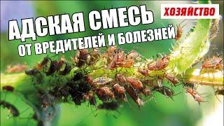 видео Какие растения отпугивают вредителей в огороде