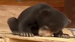 Маленький медвежонок засыпает