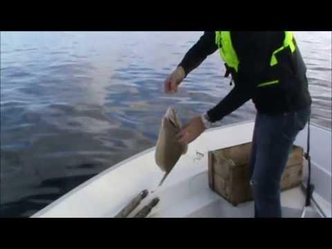 Fiske med miniliner