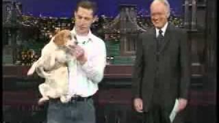 letterman dog plays dead