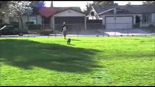 Sierra - Frisbee Dog