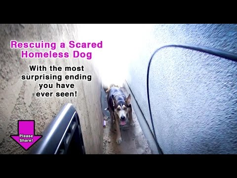 Thumbnail: We Thought We Were Rescuing One Dog, But We Were In For A HUGE Surprise! Please Share!