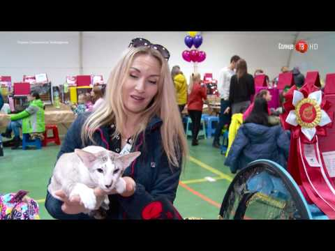 20.03.2017 Выставка кошек в Южно-Сахалинске