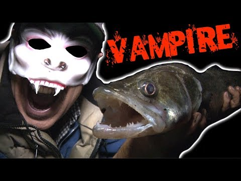 Fishing For VAMPIRE FISH - The Fish With FANGS!