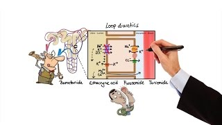 Bagaimana kadar kalium serum mempengaruhi potensial membran istirahat dan potensial aksi jantung; EK.