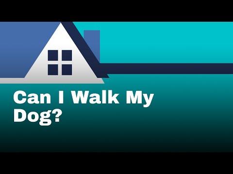 Coronavirus + Dogs: Can I Walk My Dog?
