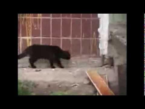 Como las ratas entran en tu casa youtube for Ahuyentar ratas jardin