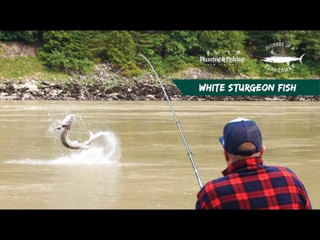 DinosaurFish Hunt - Fraser River, Canada
