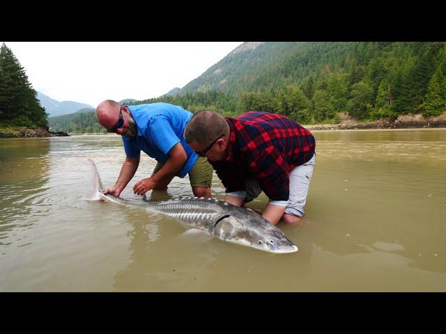 DinosaurFish Hunt - Fraser River, Canada