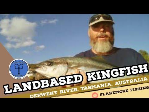 Land Based Kingfish: Derwent River, Tasmania, Australia