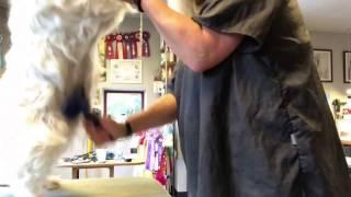 Sådan børster du din hund - del 2