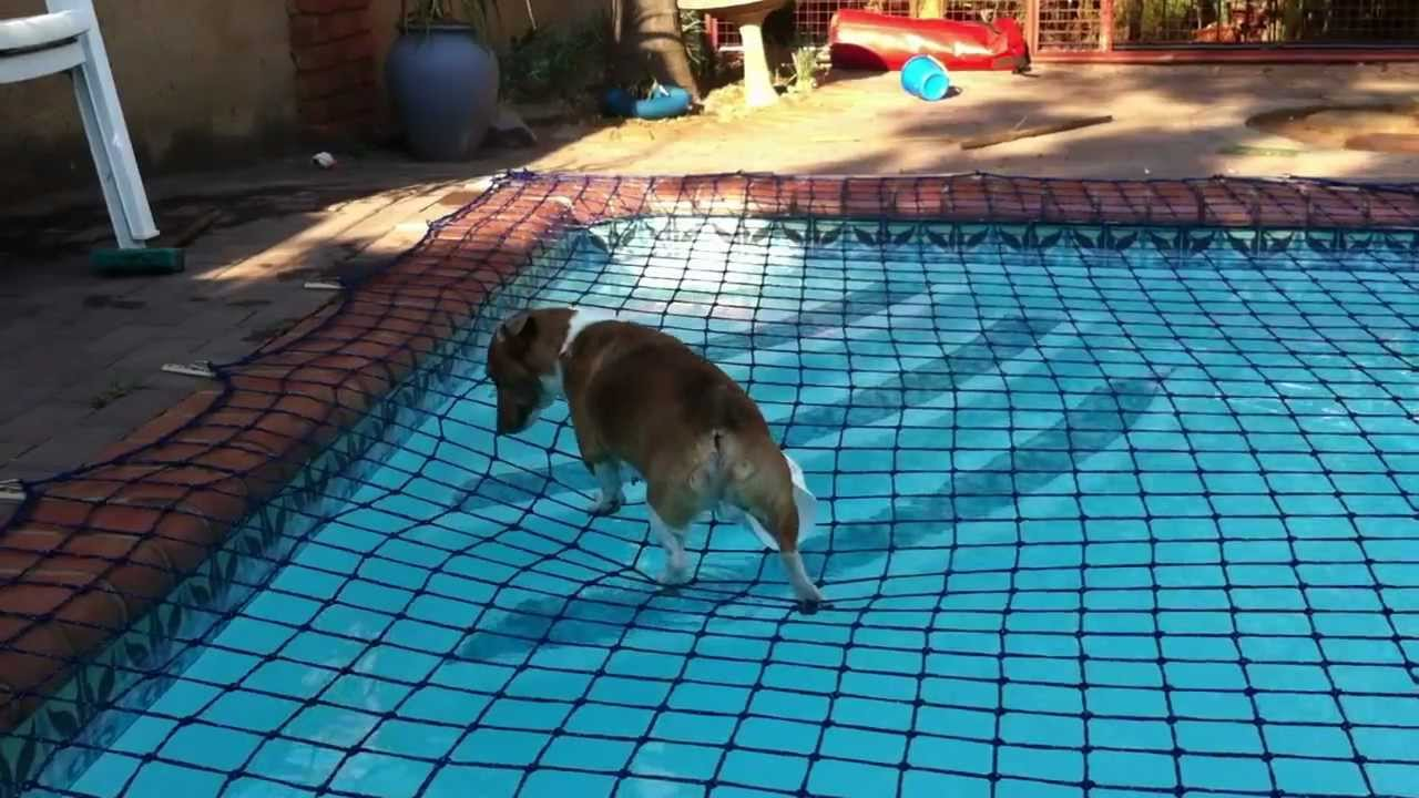 Crazy dog walking on pool net youtube for How to make a pool net