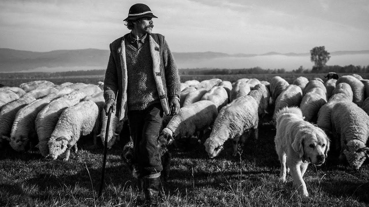 Pasterze - film dokumentalny