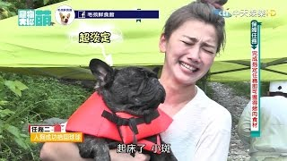 2016.09.11《寵物大聯萌》完整版 短腿的逆襲!抓住夏天的尾巴~