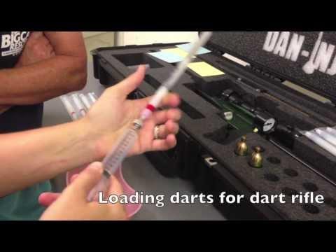 Dart Rifle and Jab Stick Training
