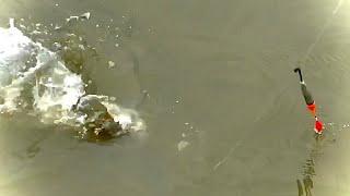 Поплавок КРУПНЫМ ПЛАНОМ Рыбалка на карпа