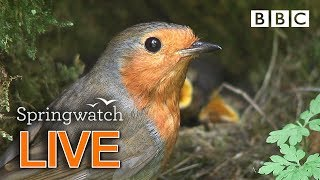 Cute birds and animals streaming cams Day 6 Part 1  | BBC Springwatch