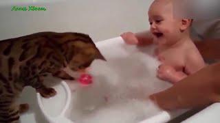Приколы с животными. Кот в ванной.