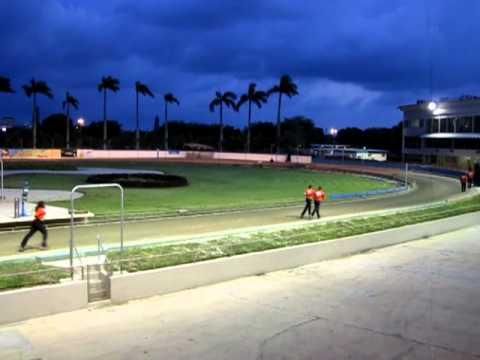 greyhound race flager dog track 1