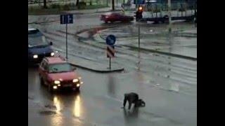 crossing the street drunk