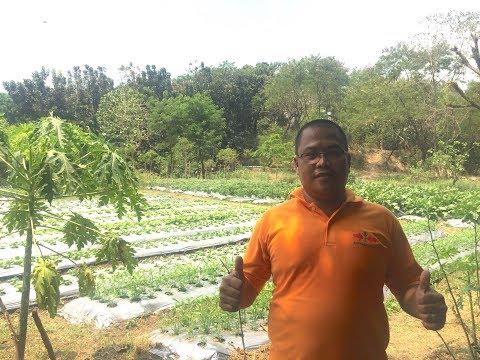 Vegetable Garden in the city. Growing crops in Metro Manila. Try it.